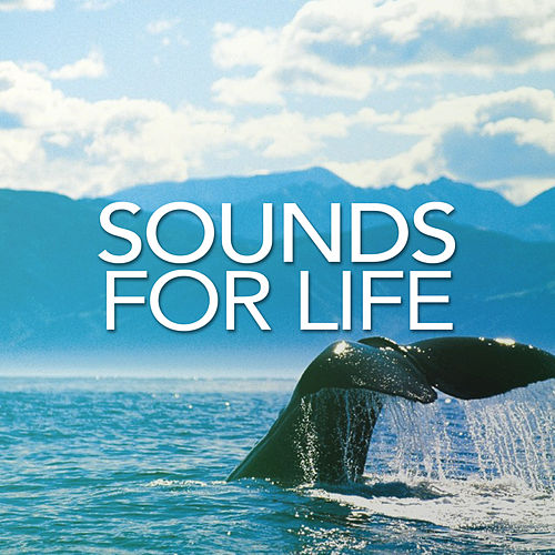 Sounds For Life - EP by Sounds for Life