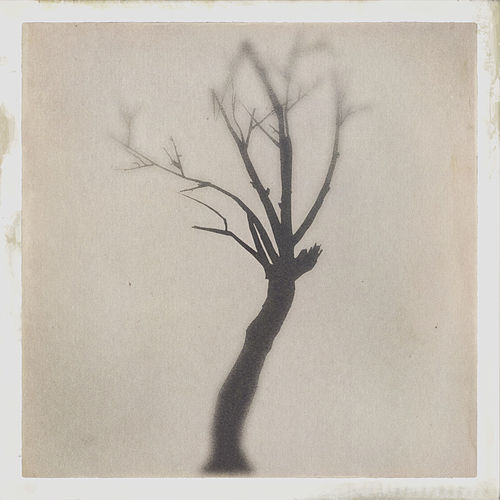 The Danger Tree - EP by Marc Canham