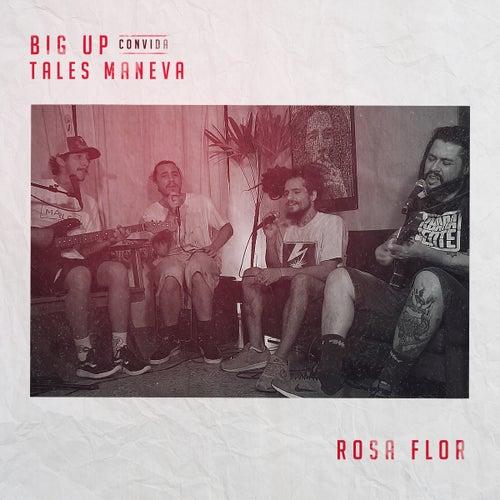Rosa Flor (Acústica) de Big Up