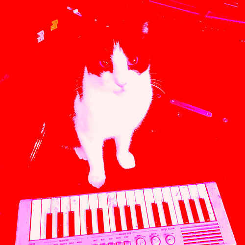 Shape of You (Cover Version) by Picasio Cat