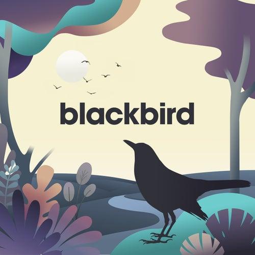 Blackbird - EP de Sleepyheadz