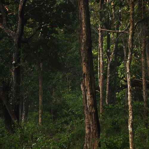 Woodland by Jayesh