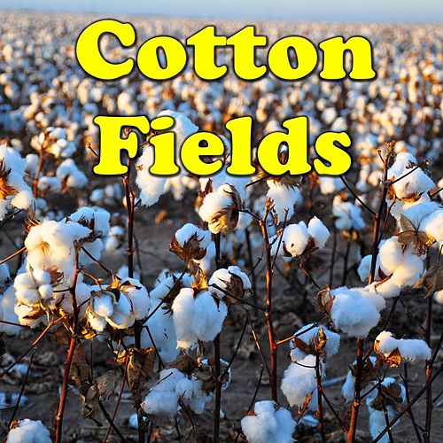Cotton Fields by Various Artists