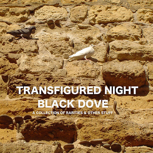 Black Dove: A Collection of Rarities and Other Stuff von Transfigured Night