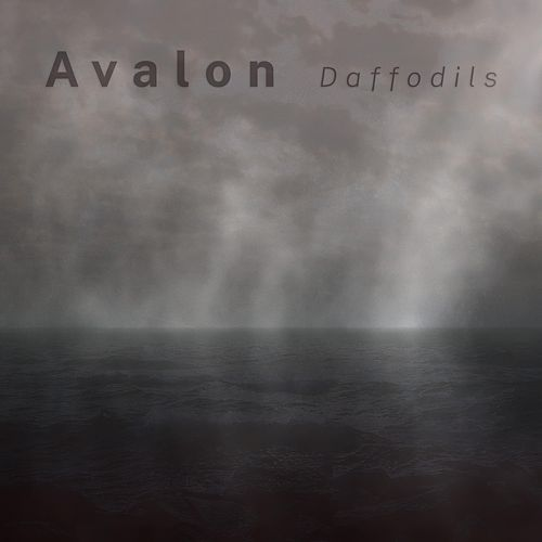 Daffodils by Avalon