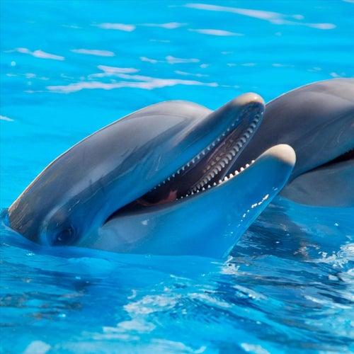 Vamos Delfines by La Galeria