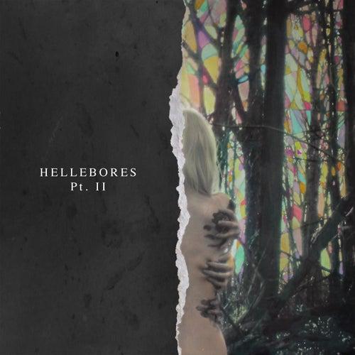 Hellebores, Pt. II by Niights