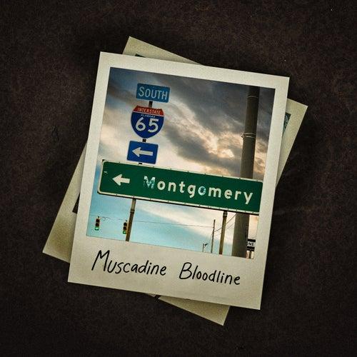Montgomery de Muscadine Bloodline