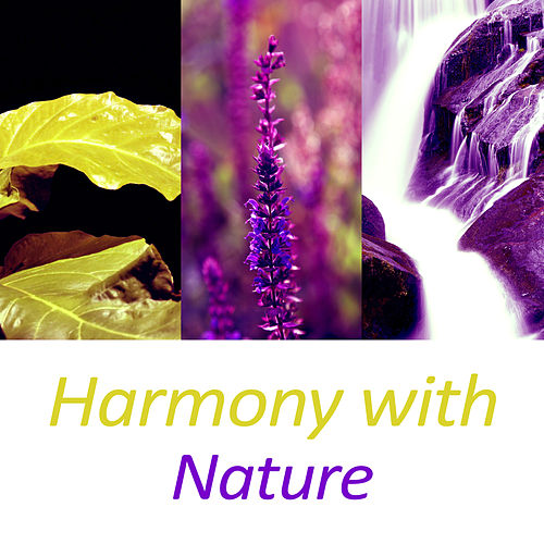 Harmony with Nature – Gentle Nature Music, Relax Yourself, Nature Harmony, New Age Music, Mother Nature de White Noise Research (1)