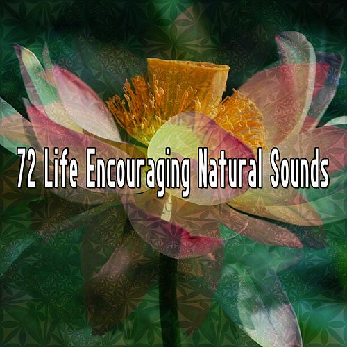 72 Life Encouraging Natural Sounds de Meditación Música Ambiente