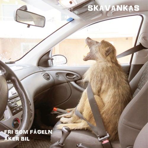 Fri Som Fågeln Åker Bil de Skavankas
