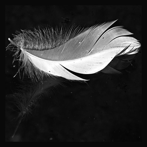 Feather Flight by Deryn Cullen