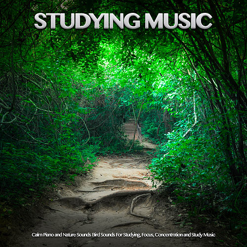 Studying Music: Calm Piano and Nature Sounds Bird Sounds For Studying, Focus, Concentration and Study Music by Einstein Study Music Academy (1)