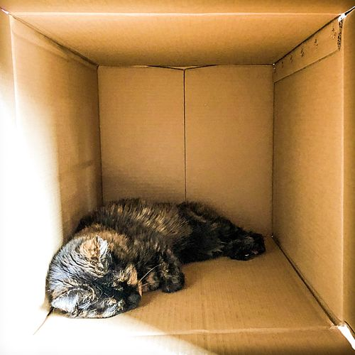 Kitten in a Box by Caroline Simpson