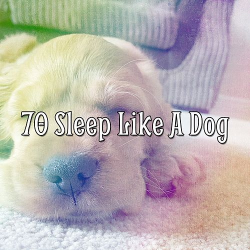 70 Sleep Like a Dog de Trouble Sleeping Music Universe