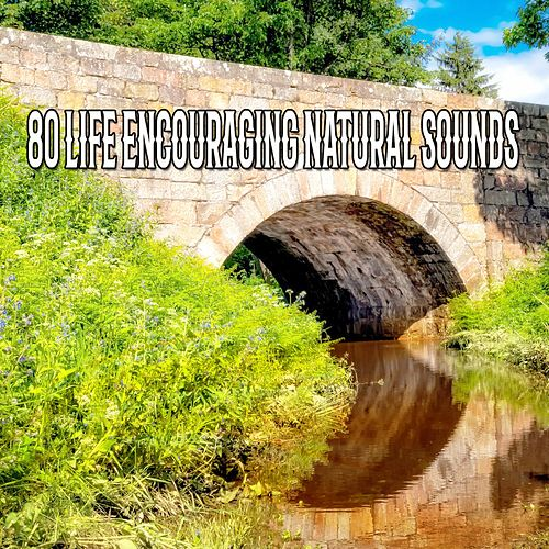 80 Life Encouraging Natural Sounds von Yoga Music