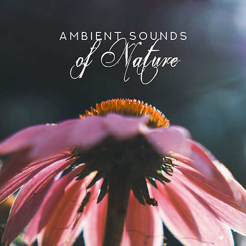 Ambient Sounds of Nature by Ambient Music Therapy