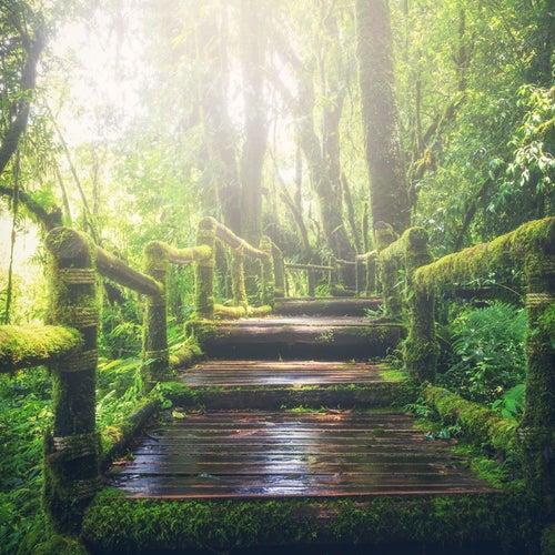 Rainforest & Birds & Jungle Sound. Loopable, No Fade. von Jungle Sound