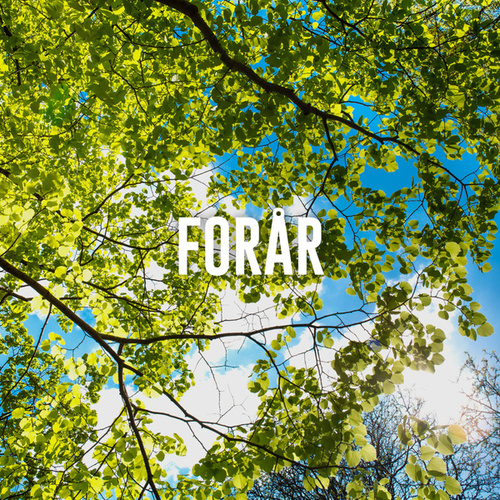 Forårshygge - Hyggelig musik til afslapning - Hyggelige sange til gode tider de Various Artists