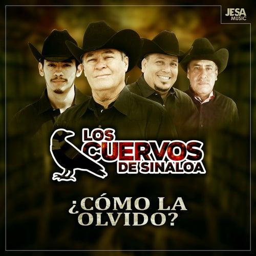 ¿Cómo la Olvido? de Los Cuervos de Sinaloa