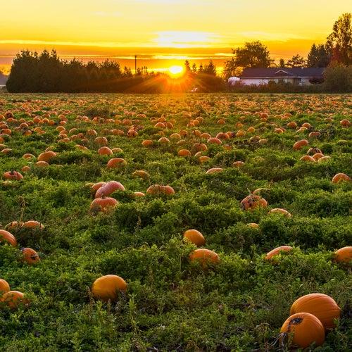 Fallfrukt by G.I. Varra