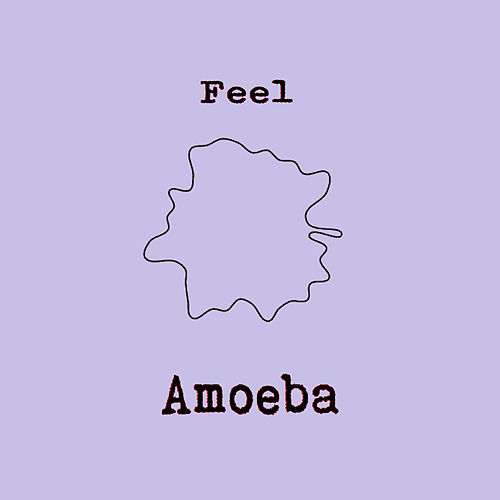 Feel by Amoeba