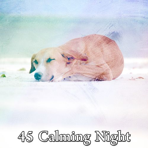 45 Calming Night de Lullaby Land