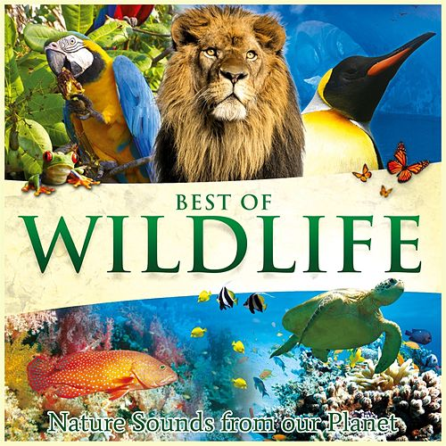 Best of Wildlife - Nature Sounds from Our Planet by Global Journey