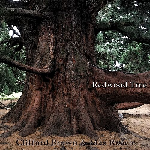 Redwood Tree by Clifford Brown