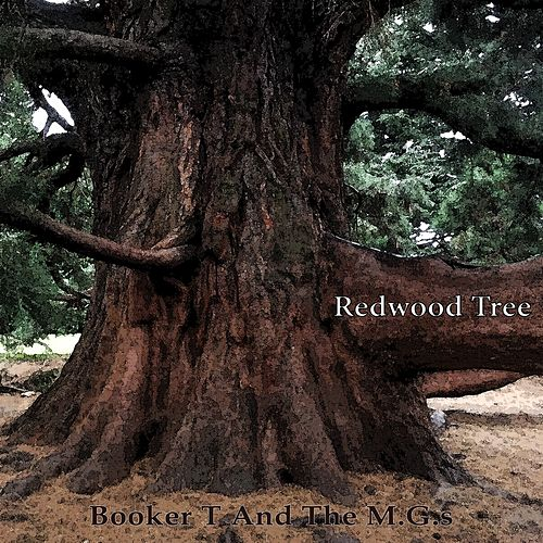 Redwood Tree von Booker T. & The MGs