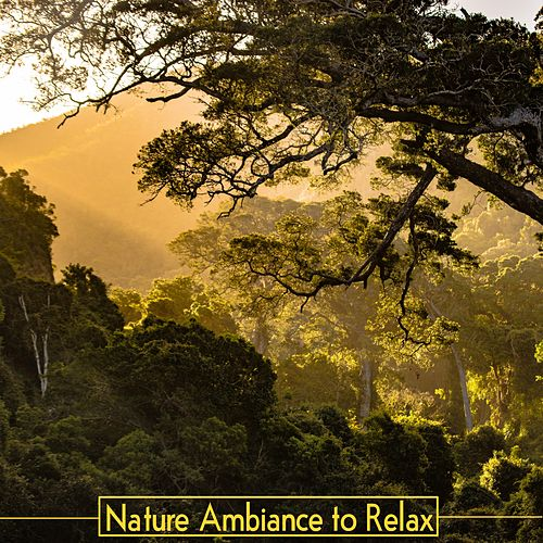 Nature Ambiance to Relax by Sleep Sound Library