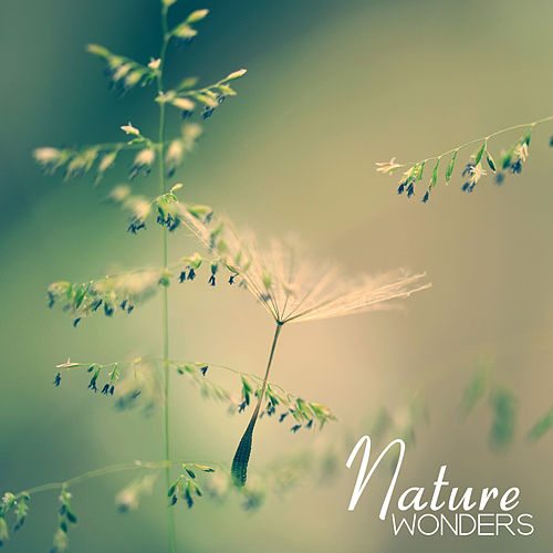 Nature Wonders – Sounds of Nature for Pure Relaxation, Sleep, Spa, Deep Meditation, Massage, Inner Harmony, Zen Lounge, Healing Music to Calm Down by Trouble Sleeping Music Universe