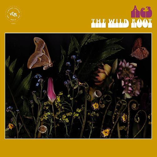 The Wild Root by Alan Evans Trio