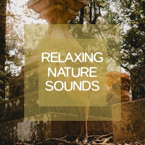 Relaxing Nature Sounds de Dormir