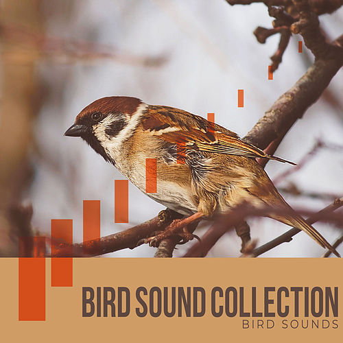 Bird Sound Collection by Bird Sounds