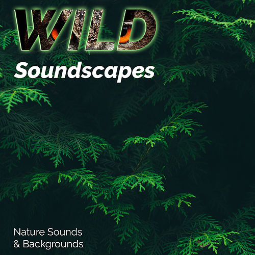 Rain Sounds - The Soothing And Relaxing Sound Of Rain by