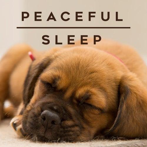 Peaceful Sleep de Various Artists