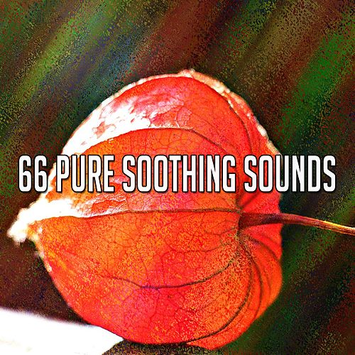 66 Pure Soothing Sounds by Asian Traditional Music