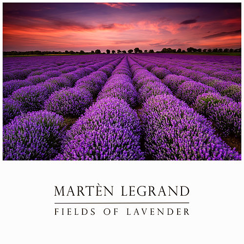 Fields Of Lavender von Martèn LeGrand