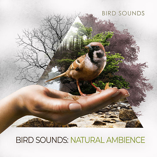 Bird Sounds: Natural Ambience by Bird Sounds