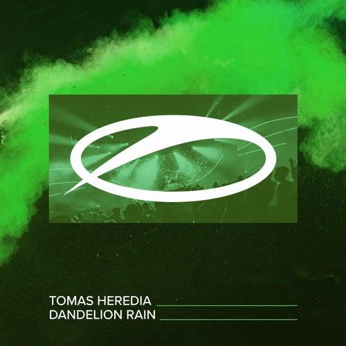Dandelion Rain de Tomas Heredia