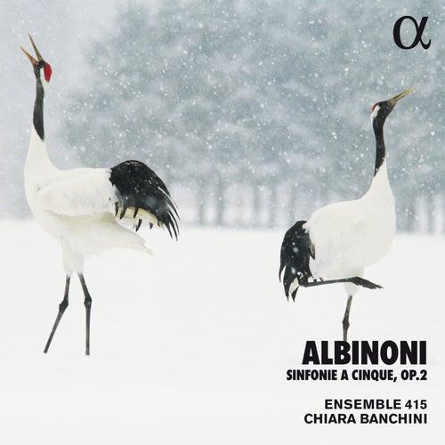Albinoni: Sinfonie a cinque, Op. 2 (Alpha Collection) by Ensemble 415