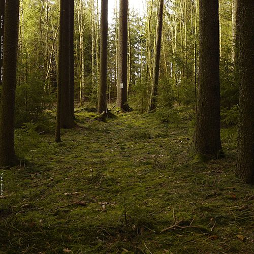 Forest Recording by Ian Fisher