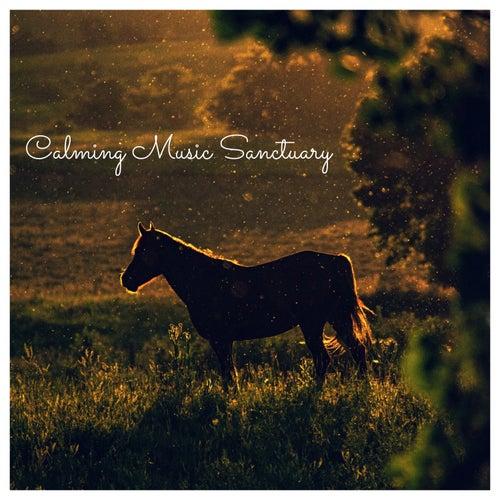 Calming Music Sanctuary von Various Artists
