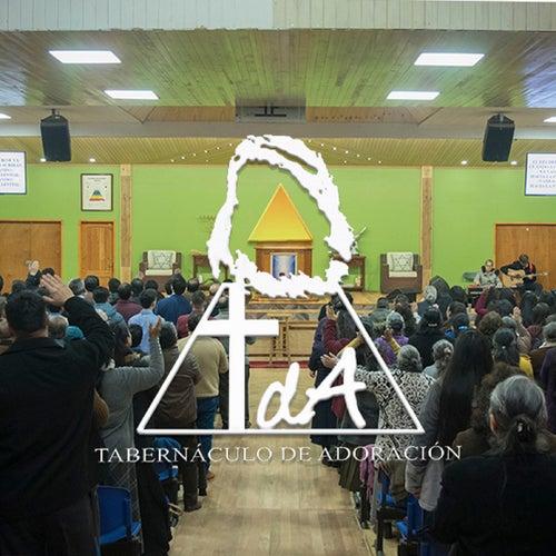 Tda 2019, Vol. 1 (En Vivo) de Tabernáculo de Adoración