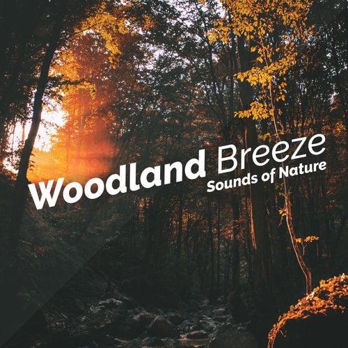 Woodland Breeze de Various Artists