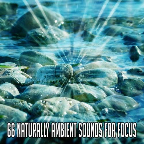 66 Naturally Ambient Sounds for Focus de Nature Sounds Artists