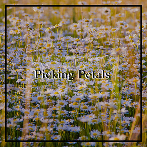 Picking Petals by Pickle