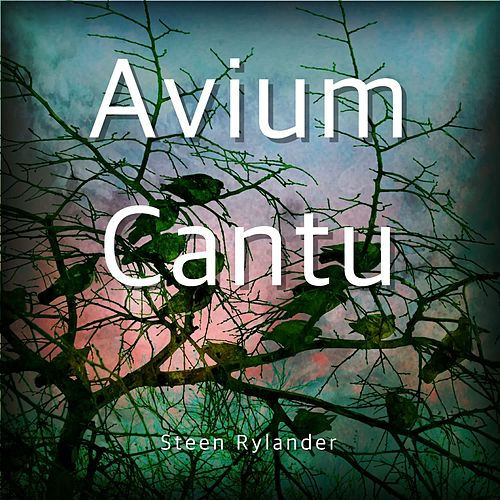Avium Cantu by Steen Rylander