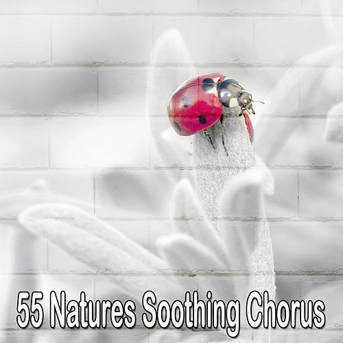 55 Natures Soothing Chorus by S.P.A